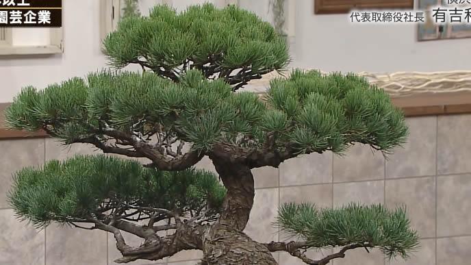 横浜植木株式会社